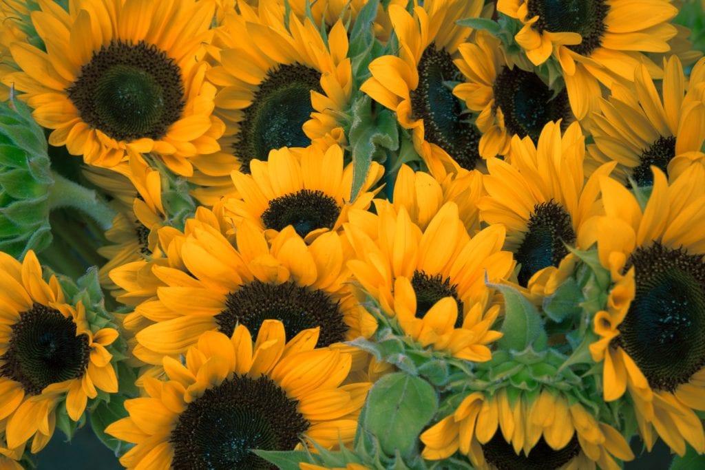 vitamin d sunshine mens health testosterone boosters